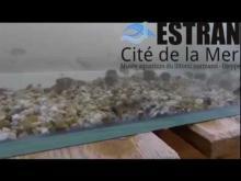 Estran Cité de la mer en vidéo