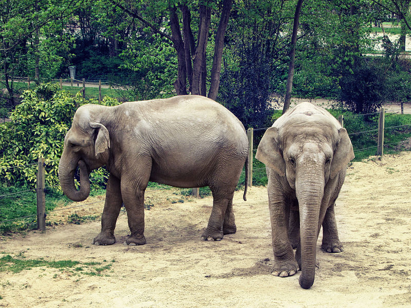 Zoo d'Amiens By MonsieurDisorder (Own work) CC BY-SA 3.0 via Wikimedia Commons