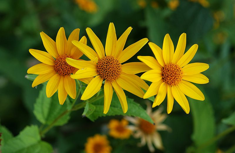 Ménagerie du Jardin des Plantes By Alvesgaspar (Own work) CC BY-SA 3.0 via Wikimedia Commons