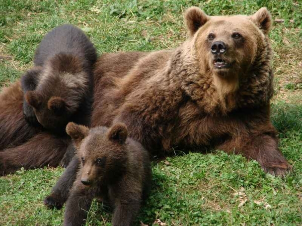 Parc Animalier de Borce photo de parc-ours.fr