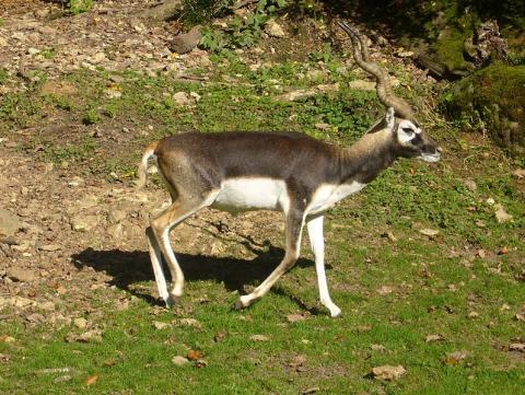Réserve zoologique de Sauvage By Clara.Hoke (Own work) CC0, via Wikimedia Commons