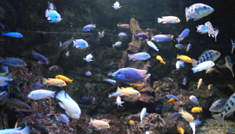 Aquarium du Limousin