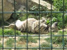 Parc Zoologique du Bois d'Attilly By Tangopaso (Own work) via Wikimedia Commons
