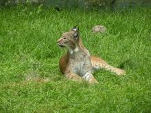 Zoo de Jurques By Chatsam (Own work) CC BY-SA 4.0 via Wikimedia Commons