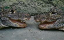 La Planète des Crocodiles Par Thierry Bordat (Travail personnel) CC BY-SA 3.0 via Wikimedia Commons