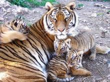 Zoo du Mont Faron