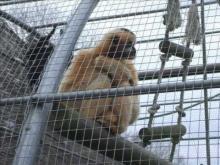 Zoo d'Asson en vidéo