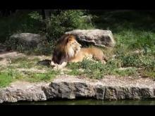 Jardin zoologique de la ville de Lyon en vidéo
