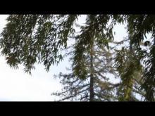 La bambouseraie de Prafrance en vidéo
