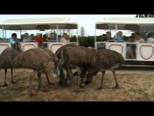 Réserve de Beaumarchais en vidéo