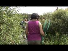 Espace naturel sensible de l'Orne : le Marais du Grand Hazé en Vidéo