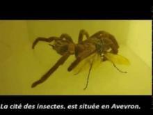 Micropolis Cité des insectes en vidéo