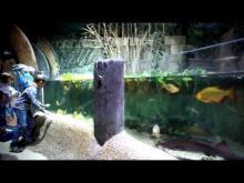 Aquarium Sea Life Paris en Vidéo