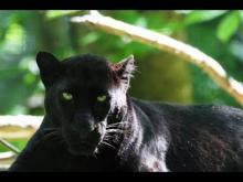 Zoo de Cerza en vidéo
