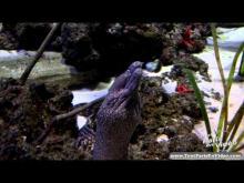 Aquarium de Paris - Cineaqua en Vidéo
