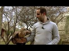 La Volerie du Forez à Marcilly-le-Châtel en Vidéo