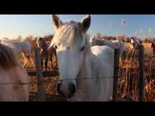 Immersion dans les Marais du Vigueirat en Vidéo