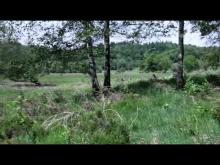Vidéo de la tourbière des Dauges